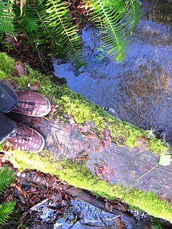 My feet on a mossy bridge, by Grace Kerina