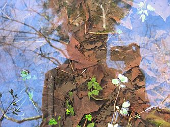 My reflection in a puddle, by Grace Kerina